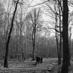 Photo Forêt